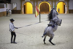 CA Jerez REEcuestre 137 - Andalucía Film Commission