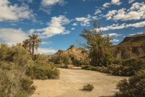 AL Oasis Lawrence de Arabia 2 - Andalucía Film Commission